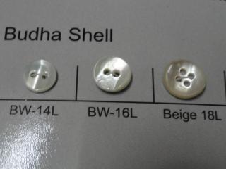 Budha Shell