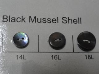 Black Mussel